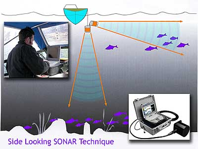 how sonar works