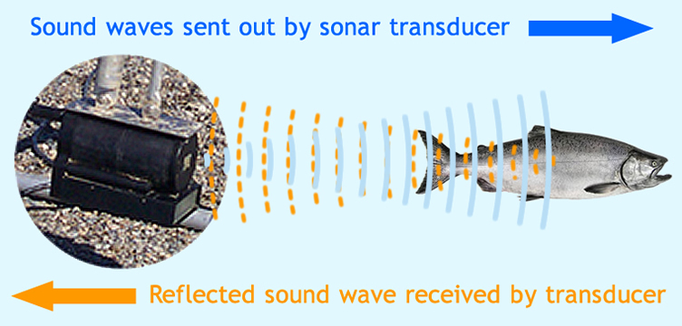 sonar sound waves